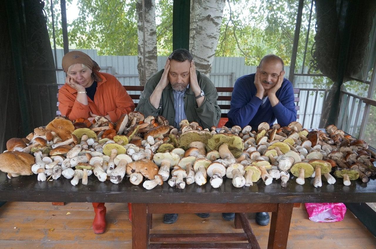 какие грибы собирают в августе 2016 подарить