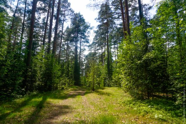 parkovaya-zona (4)