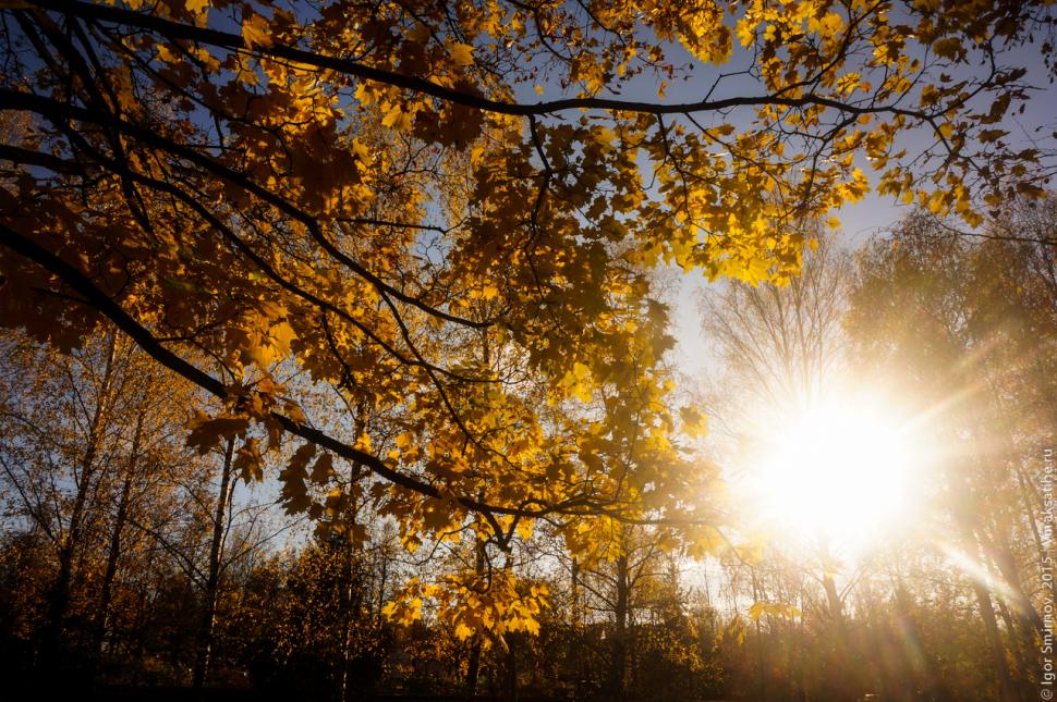 autumn-2015 (10)