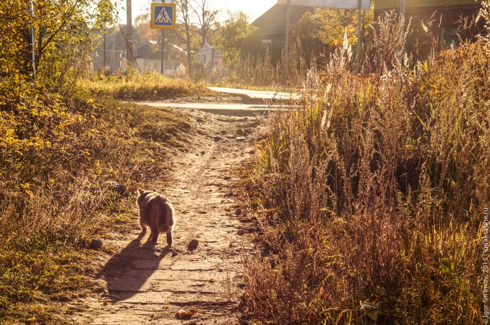 Кошка на улице Железнодорожная