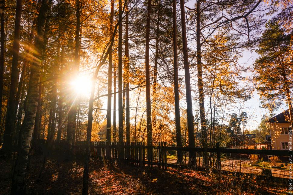 autumn-2015 (3)