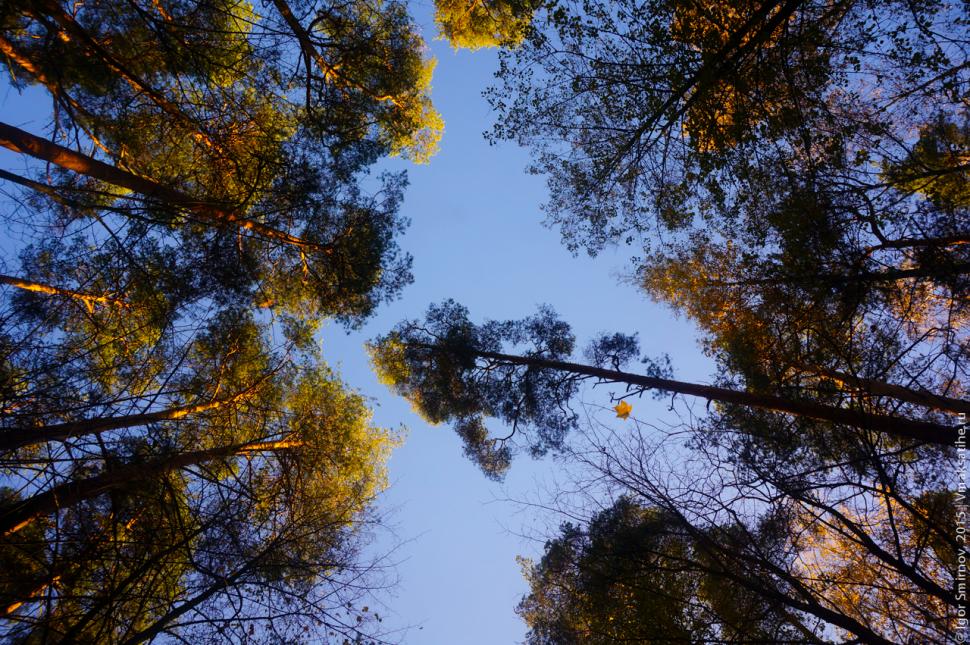 autumn-2015 (5)