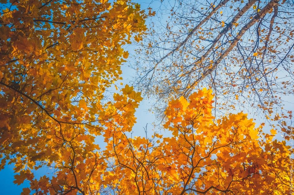 autumn-2015 (9)