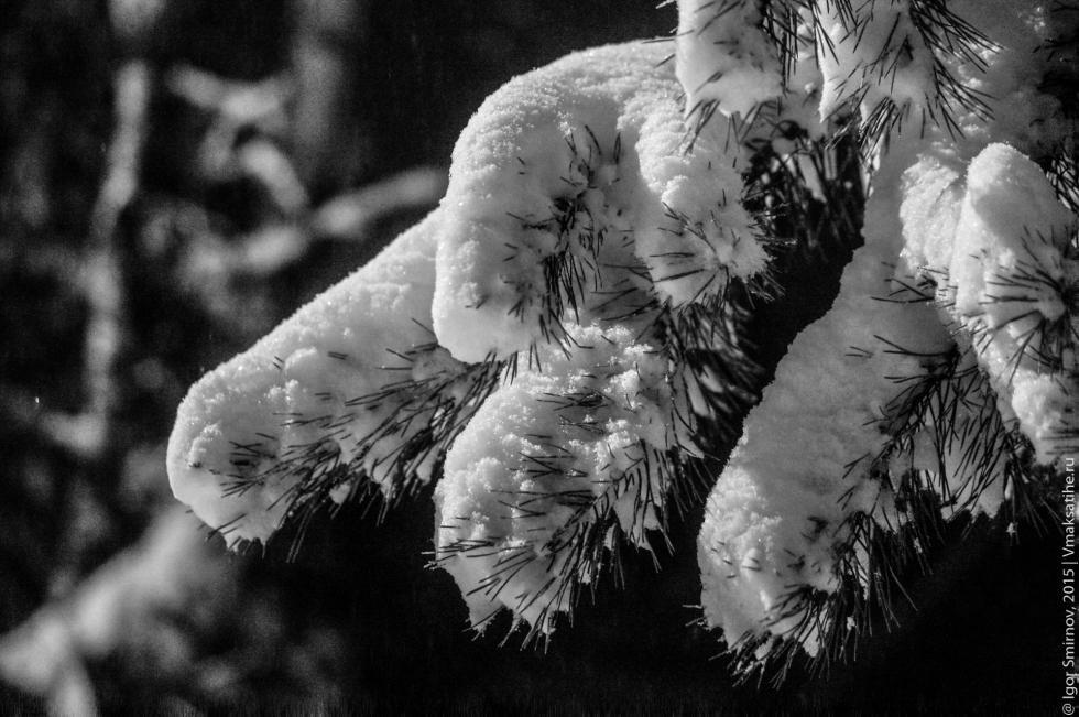 progulka-v-snegopad (19)